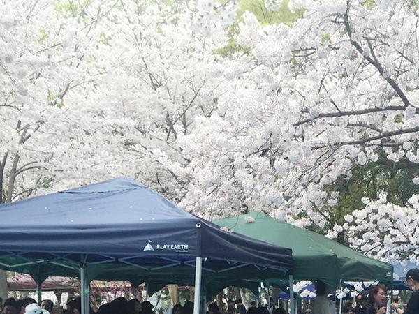 大阪城お花見BBQ